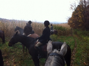 Foggy Fall Day Foxhunting