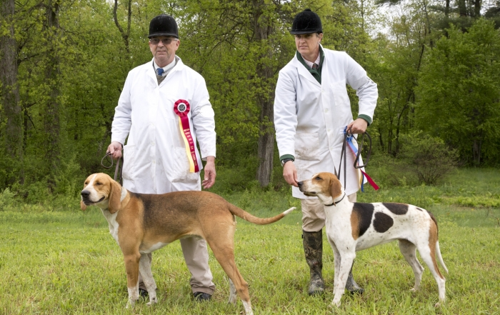 Millbrook Hunt's Unentered hound wins Best in Show, Windy Hollow's Riley runner-up